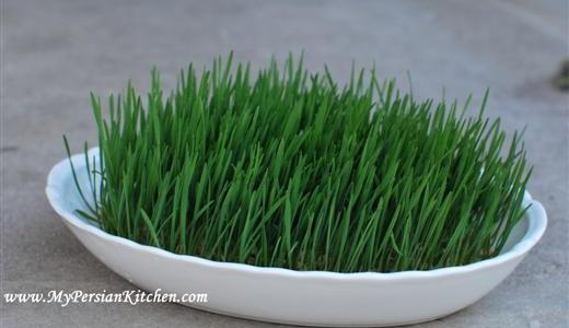 Sabzeh: Norouz Sprouts