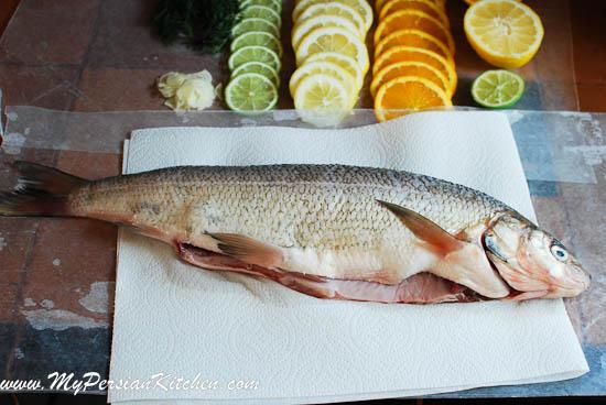 Types of saltwater whitefish for White fish types